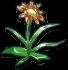 Fancy Flower Blueprint