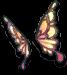 Butterfly Wing Ears