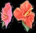 Hibiscus Blueprint