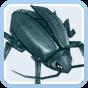 Thief Bug Male
