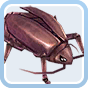 Thief Bug Female